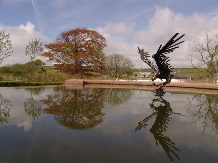 Red Kite in mirror pool