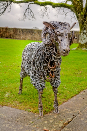 Welsh Mountain Ram